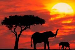 big_kenya_19102010194650