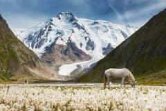 лошадь в Киргизии