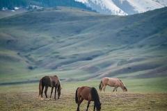 лошади в Киргизии