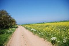Поселок Андреевка в Крыму
