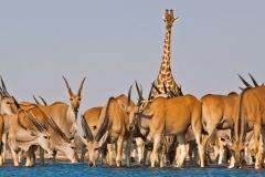 etosha-national-park-namibia-w2WgGX9