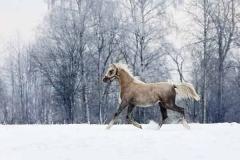 pony-ferma