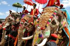 наездники слонов