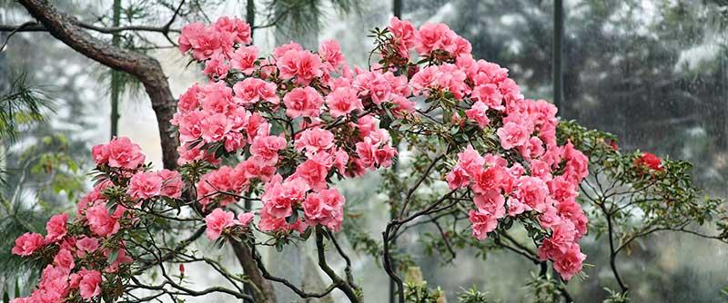 фото из ботанического сада Санкт-Петербурга