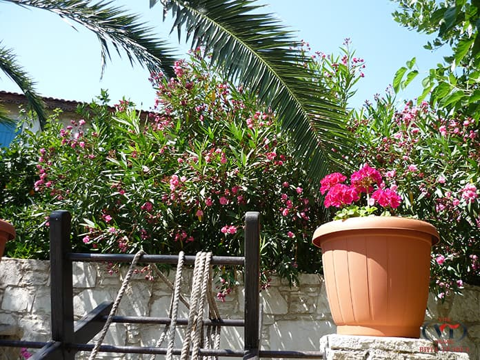 красивая деревня Кипра