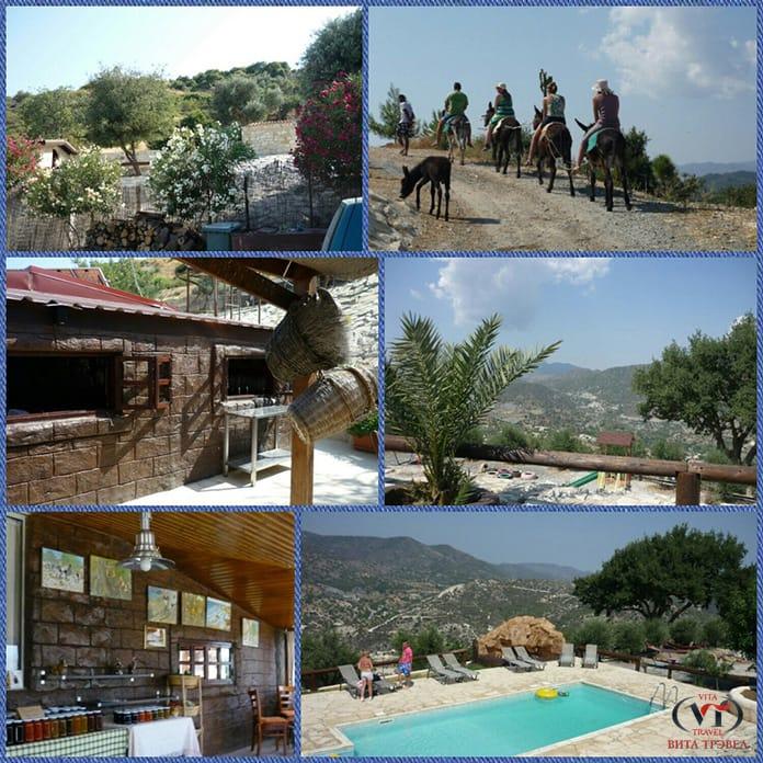 ферма осликов на Кипре
